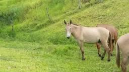 Vendo este burro