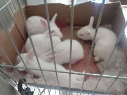 Filhotes de coelho.