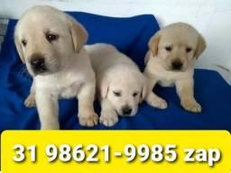 Título do anúncio: Canil Filhotes Cães Pet BH Labrador Dálmata Boxer Rottweiler Pastor Golden