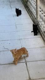 4 filhotes de gato para adoção