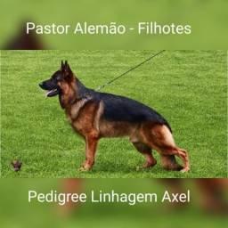 Pais Campeões - Pastor Alemão - Em 12X Sem Juros