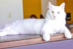 Vacinação em Domicílio - Cães e Gatos