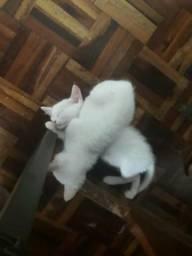 Doa-se casal de gatinhos