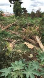 Corte e podas de árvores  desgalhamos Pinheiro