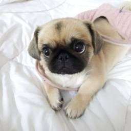 lindos  pug   pug    pug