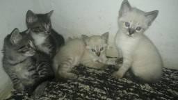 Título do anúncio: Doa se lindos gatinhos angorá mestiço