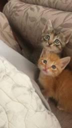 Título do anúncio: Gatos filhotes doação
