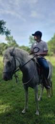 Potra e cavalo