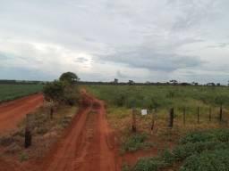 Fazenda com 76,4 hectares em jatai goias FONE 64 96763118