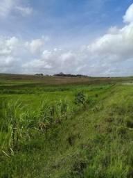 Fazenda 300 hectares em Atalaia ao lado do Fórum