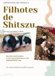 Shitszu