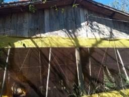 Barracão aviário - ótima conservação