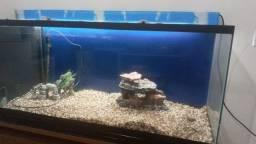 Título do anúncio: Vende-se aquário 240L
