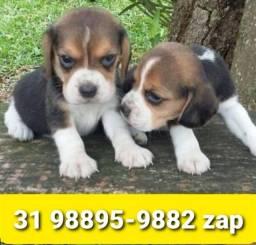 Título do anúncio: Canil Filhotes Cães Diferenciados BH Beagle Poodle Shihtzu Maltês Lhasa Yorkshire