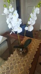 Orquídea branca lindo arranjo