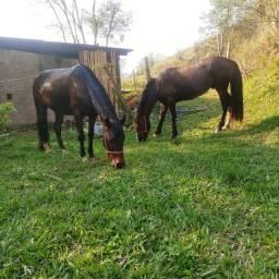 Título do anúncio:  Cavalos barato