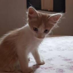 Título do anúncio: estou doando gatinha