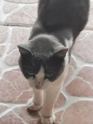 Título do anúncio: Gato macho doar