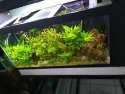 Aquario com base de metalon 120x 40 x 50, 240 lt. aceito ofertas