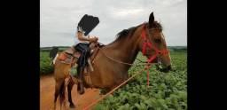 Cavalo Capão e égua já com selas americanas