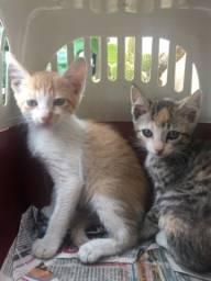 Título do anúncio: Gatos para adoção responsável