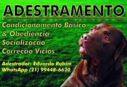 Adestrando de cães comportamental (Zona Norte)