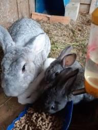 Título do anúncio: Vende-se coelhos