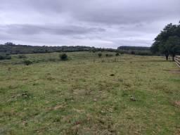 Vendo Fazenda 230 hectares excelente Localização
