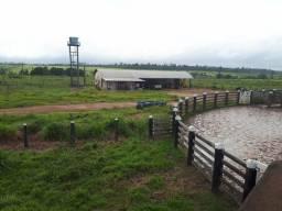 Barbada!!! Fazenda com 470 Alqueires na Mãe do Rio, Estado do Pará