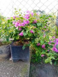 Vendi-se muda de primavera !!