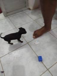 Título do anúncio: Venda de cachorro