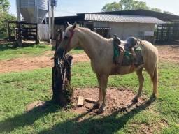 Título do anúncio: Cavalo bom de sela metade manga larga