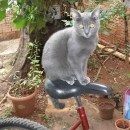 Adoro gato(a) cinza