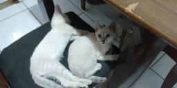 Doa-se 4 gatinhos