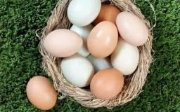 Vendo ovos caipira