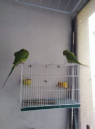 GAIOLA PEQUENA PARA pássaro