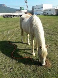 Título do anúncio: Cavalo mangalarga