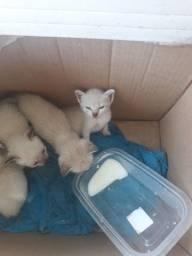 Título do anúncio: Gatos pra doação