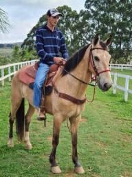 Título do anúncio: Cavalo com sela completa