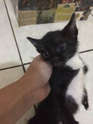 Doação de gatinhas!