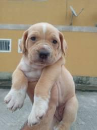 Título do anúncio: Lindos filhotes de cachorro doação