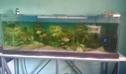 Vendo aquário 460 litros