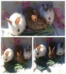 Filhotes de coelhos comuns