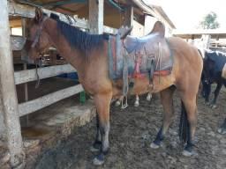 Vendo cavalo novo