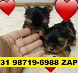 Canil Lindos Filhotes Cães BH Yorkshire Maltês Basset Poodle Lhasa Shihtzu