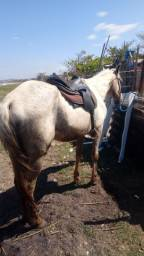 Título do anúncio: Cavalo rolo celular