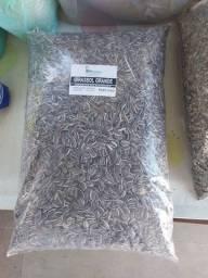 Girassol Grande - 5kg