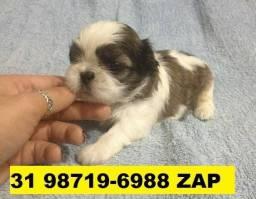 Canil Filhotes Cães Líder BH Shihtzu Beagle Poodle Lhasa Maltês Pug Bulldog Yorkshire