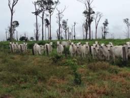 Fazenda 1.214 Hectares Terra de Cultura - Agricultável - Colíder - MT
