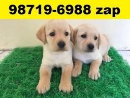 Canil Filhotes Cães Perfeitos BH Labrador Pastor Akita Boxer Rottweiler Dálmata